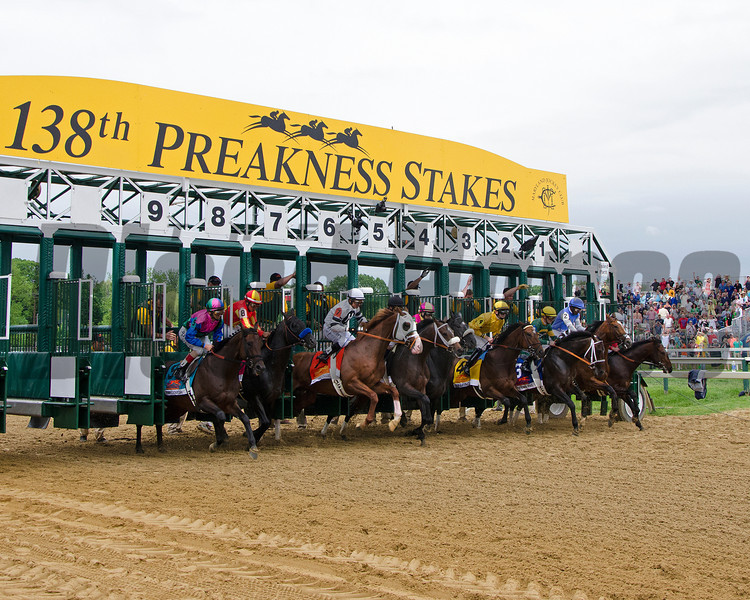 Start of the 2013 Preakness. winner Oxbox breaks from the 6 stall.<br /> Courtney Heeney photo