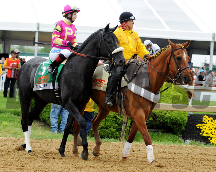Mylute Post Parade Preakness Stakes.<br /> Dave Harmon Photo