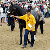 Mylute - walkover for the Preakness Stakes.<br /> Photo by Dave Harmon