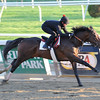Orb works at Belmont Park on May 13 in preparation for the Preakness Stakes.<br /> Coglianese Photos