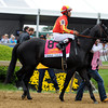 Govenor Charlie Post Parade Preakness Stakes.<br /> Dave Harmon Photo
