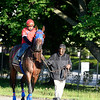 Caption: Social Inclusion goes to the gate<br /> Belmont and undercard works on June 2, 2014, at Belmont Park in Elmont, N.Y.<br /> MonOrigs1   image3666<br /> Photo by Anne M. Eberhardt