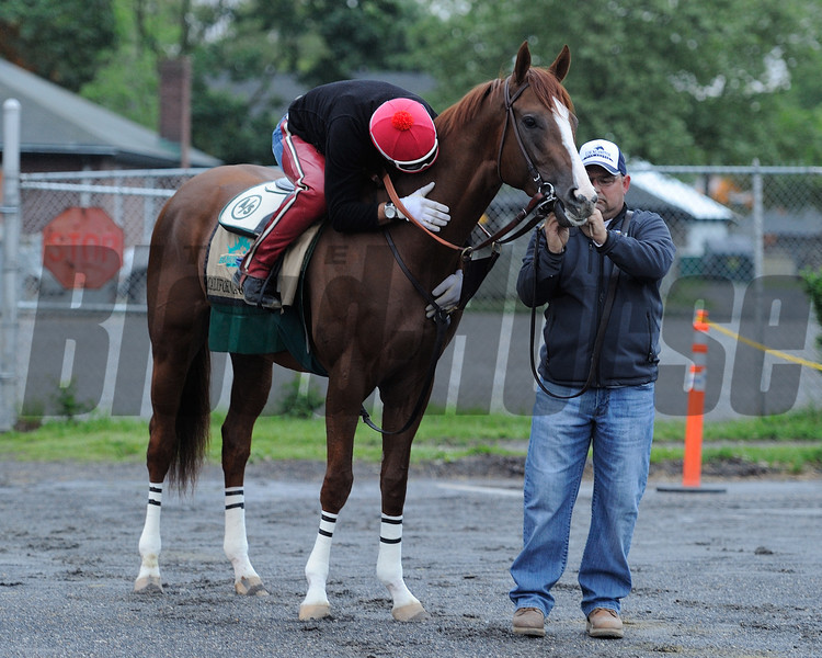 California Chrome<br /> Belmont Park, May 24, 2014<br /> Coglianese Photos/Susie Raisher