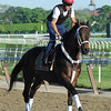 Ride On Curlin at Belmont Park May 25<br /> Coglianese Photos/Susie Raisher