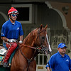 Caption: California Chrome with Willie Delgado is lead into paddock by Alan Sherman<br /> Belmont and undercard works on June 3, 2014, at Belmont Park in Elmont, N.Y.<br /> TuesOrigs1  image994<br /> Photo by Anne M. Eberhardt