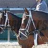 Commissioner and Matterhorn at Belmont Park.<br /> Coglianese Photos/Susie Raisher