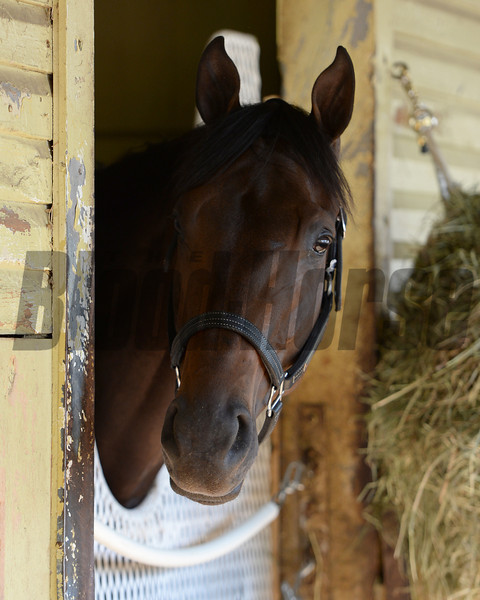 General a Rod<br /> Belmont Park, June 6, 2014<br /> Coglianese Photos/Susie Raisher