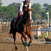 California Chrome at Belmont Park May 25.<br /> Coglianese Photos/Chelsea Durand