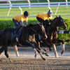 Tonalist - Belmont Park, May 31, 2014<br /> Coglianese Photos/Lauren King