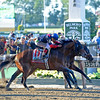 Caption: Tonalist with Joel Rosario <br /> wins the Belmont Stakes (gr. I) on June 7, 2014, at Belmont Park in Elmont, N.Y.<br /> 11-Belmont1 image868<br /> Photo by Anne M. Eberhardt