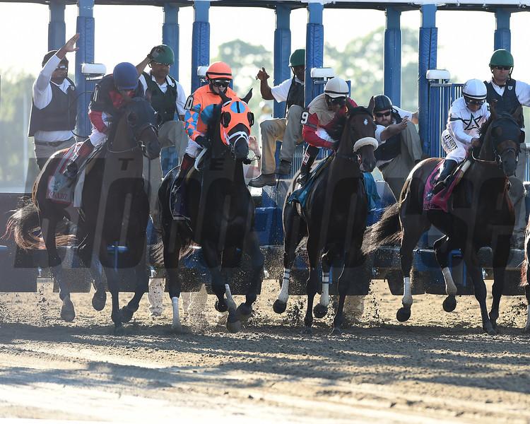 Tonalist wins the 2014 Belmont Stakes.<br /> Coglianese Photos/Courtney Heeney