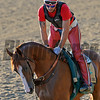 Caption: California Chrome on track first time since work<br /> Belmont and undercard works on June 2, 2014, at Belmont Park in Elmont, N.Y.<br /> MonOrigs1   image637<br /> Photo by Anne M. Eberhardt