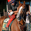Caption: Willie Delgado on California Chrome, in the tunnel, checking out fans, media, before going on track.<br /> Belmont and undercard works on June 6, 2014, at Belmont Park in Elmont, N.Y.<br /> FriOrigs1 image197<br /> Photo by Anne M. Eberhardt