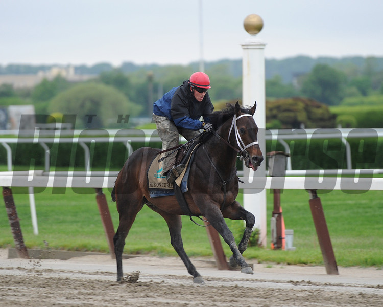 Ride On Curlin<br /> Belmont Park, May 24, 2014<br /> Coglianese Photos/Susie Raisher