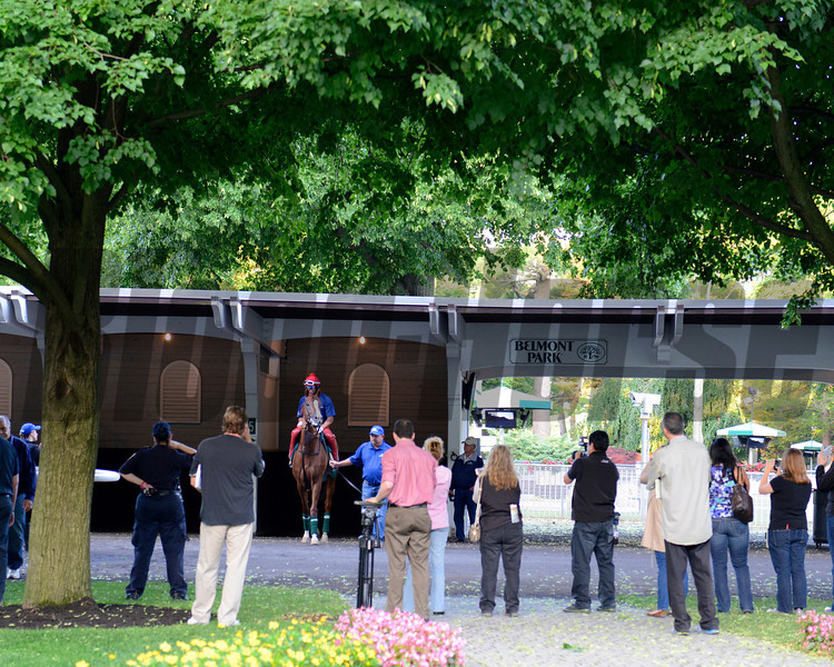 Caption: California Chrome schooling in the paddock with Alan Sherman and Art Sherman<br /> Belmont and undercard works on June 3, 2014, at Belmont Park in Elmont, N.Y.<br /> TuesOrigs1  image384<br /> Photo by Anne M. Eberhardt