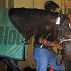 Commanding Curve at Belmont Park 6/1/2014<br /> Coglianese Photos