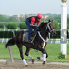 Ride On Curlin at Belmont Park May 27, 2014<br /> Coglianese Photos/Susie Raisher