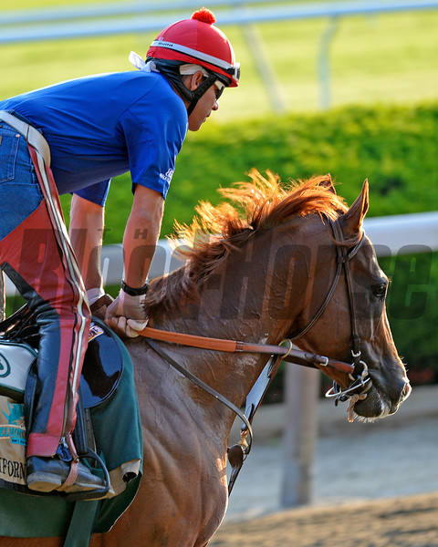 Caption: California Chrome with Willie Delgado<br /> Belmont and undercard works on June 3, 2014, at Belmont Park in Elmont, N.Y.<br /> TuesOrigs1  image994<br /> Photo by Anne M. Eberhardt