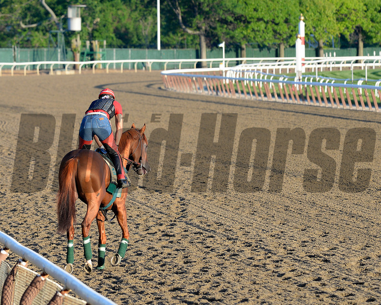 Caption: Calfiornia Crhome<br /> Belmont and undercard works on June 2, 2014, at Belmont Park in Elmont, N.Y.<br /> MonOrigs1   image652<br /> Photo by Anne M. Eberhardt