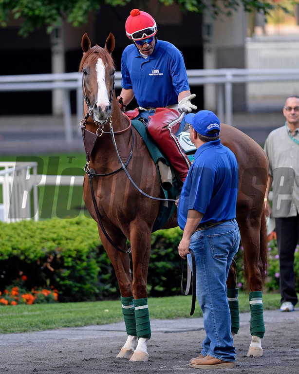 Caption: Alan Sherman walks California Chrome to the track. <br /> Belmont and undercard works on June 3, 2014, at Belmont Park in Elmont, N.Y.<br /> TuesOrigs1  image917<br /> Photo by Anne M. Eberhardt