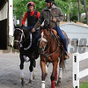 Ride On Curlin<br /> Belmont Park, May 30, 2014<br /> Coglianese Photos/Susie Raisher