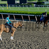Caption: The Pony and his role in leading a horse to the track.<br /> Belmont and undercard works on June 6, 2014, at Belmont Park in Elmont, N.Y.<br /> FriOrigs1 image285<br /> Photo by Anne M. Eberhardt