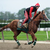 California Chrome at Belmont Park, May 28, 2014<br /> Coglianese Photo/Lauren King