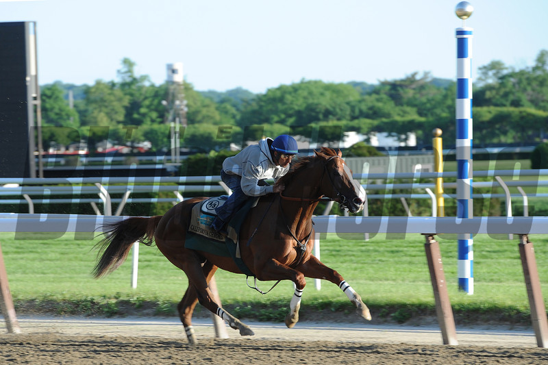 California Chrome<br /> Belmont Park, May 31, 2014<br /> Coglianese Photos/Chelsea Durand
