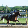 California Chrome<br /> Belmont Park, May 31, 2014<br /> Coglianese Photos/Chelsea Durand