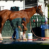 Caption: California Chrome gets bath with Raul Rodriguex and Willie Delgado holding horse<br /> Belmont and undercard works on June 1, 2014, at Belmont Park in Elmont, N.Y.<br /> SunOrigs1   image395<br /> Photo by Anne M. Eberhardt