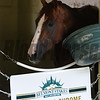 California Chrome at Belmont Park 6/1/2014<br /> Coglianese Photos/Susie Raisher