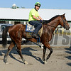 Caption: Kid Cruz walks to barn<br /> Belmont and undercard works on June 3, 2014, at Belmont Park in Elmont, N.Y.<br /> TuesOrigs2  image825<br /> Photo by Anne M. Eberhardt