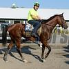 Caption: Kid Cruz walks to barn<br /> Belmont and undercard works on June 3, 2014, at Belmont Park in Elmont, N.Y.<br /> TuesOrigs2  image825<br /> Photo by Anne M. Eberhardt
