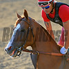Caption: California Chrome on track after work<br /> Belmont and undercard works on June 2, 2014, at Belmont Park in Elmont, N.Y.<br /> MonOrigs1   image641<br /> Photo by Anne M. Eberhardt