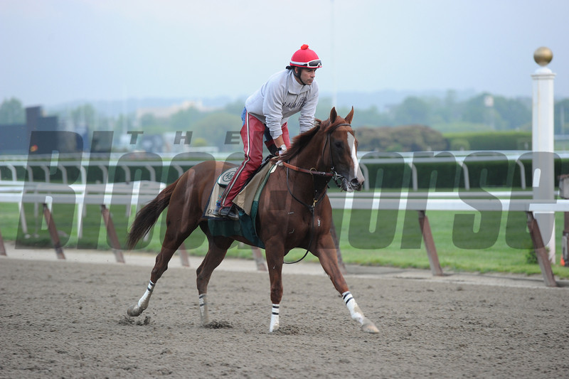California Chrome at Belmont Park, May 23, 2014. <br /> Coglianese Photos.