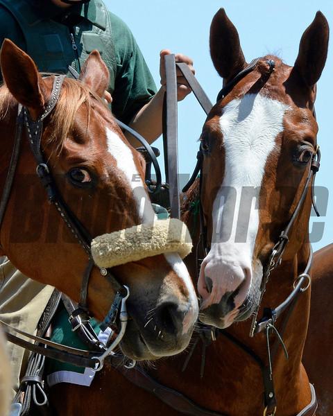 Talkin' horse talk. two ponies take a minute between races.<br /> Anne M. Eberhardt photo