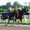 Tonalist - Belmont Park, May 31, 2014<br /> Coglianese Photos/Lauren King
