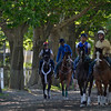 Caption: Ride On Curlin (red helmet) walks to track with pony<br /> Belmont and undercard works on June 1, 2014, at Belmont Park in Elmont, N.Y.<br /> SunOrigs1   image457<br /> Photo by Anne M. Eberhardt