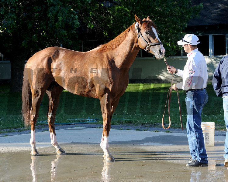 California Chrome<br /> Belmont Park,, May 31, 2014<br /> Coglianese Photos