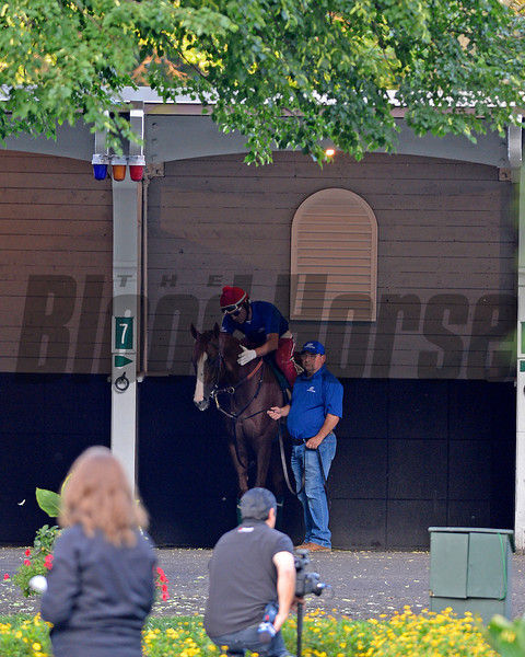 Caption: California Chrome schooling in the paddock with Alan Sherman<br /> Belmont and undercard works on June 3, 2014, at Belmont Park in Elmont, N.Y.<br /> TuesOrigs1  image384<br /> Photo by Anne M. Eberhardt