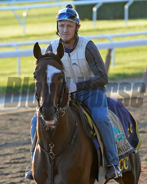 Caption: Tonalist<br /> Belmont and undercard works on June 2, 2014, at Belmont Park in Elmont, N.Y.<br /> MonOrigs1   image574<br /> Photo by Anne M. Eberhardt