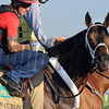 Ride On Curlin at Belmont Park May 27, 2014<br /> Coglianese Photos/Lauren King
