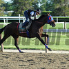 Social Inclusion - Belmont Park, May 31, 2014<br /> Coglianese Photos/Lauren King