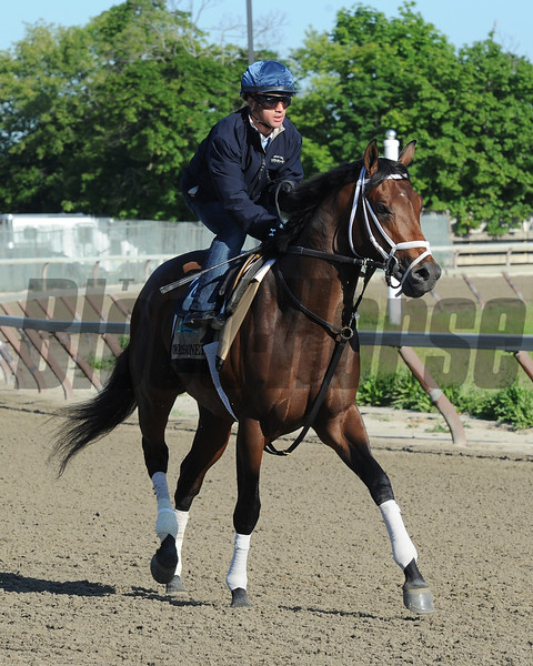 Commissioner at Belmont Park 6/1/2014<br /> Coglianese Photos/Susie Raisher