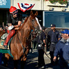 Caption: California Chrome waits in tunnel, looks around before going on track<br /> Belmont and undercard works on June 6, 2014, at Belmont Park in Elmont, N.Y. Willie Delgado up and Alan Sherman holding horse.<br /> FriOrigs1 image216<br /> Photo by Anne M. Eberhardt
