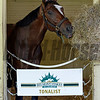 Caption: Tonalist eats hay morning after.  Morning after in the Belmont barn area with Tonalist and California Chrome<br />  on June 8, 2014, at Belmont Park in Elmont, N.Y.<br /> MorningAfterBelmont image120<br /> Photo by Anne M. Eberhardt