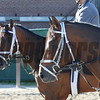 Matterhorn and Commissioner at Belmont Park 6/1/2014<br /> Coglianese Photos/Susie Raisher