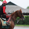 California Chrome at Belmont Park on May 28, 2014.<br /> Coglianese Photos/Lauren King