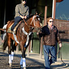 Caption: Trainer Dallas Stewart leads Commanding Curve<br /> Belmont and undercard works on June 6, 2014, at Belmont Park in Elmont, N.Y.<br /> FriOrigs1 image144<br /> Photo by Anne M. Eberhardt
