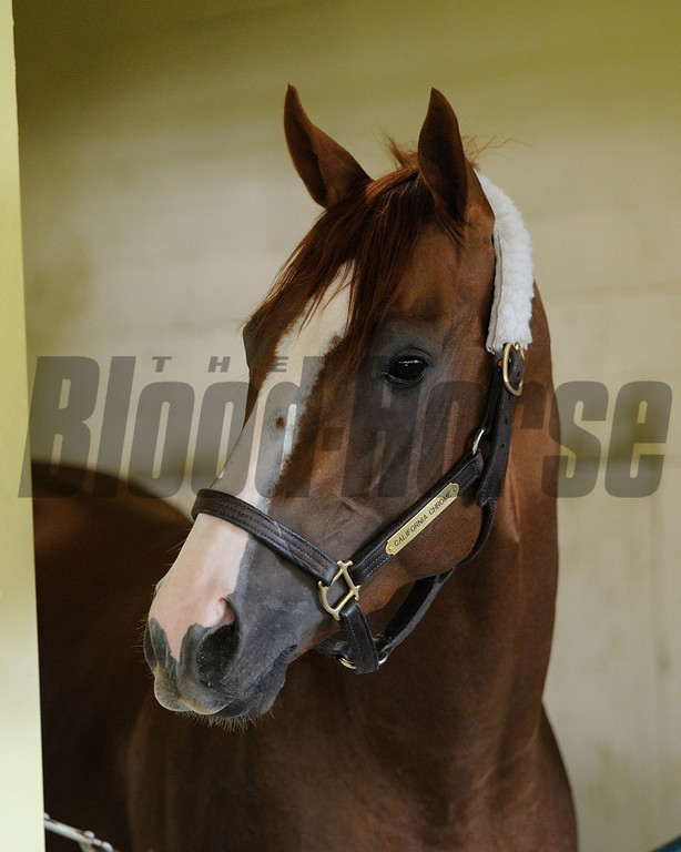 at Belmont Park May 25<br /> Coglianese Photos